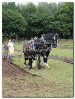 click here for Beamish Ploughing Competition 2004